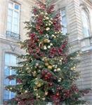 Levering versierde kerstbomen overal in België