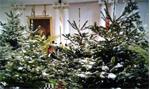Verhuur van versierde kerstbomen, bij u geleverd