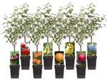 Fruitplanten nieuwe en ouden soorten.