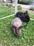 prachtige konijntjes