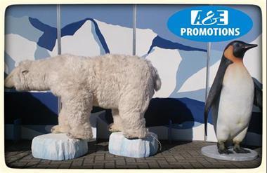 Grote foto verhuur top ijsberen hasselt gent brugge diensten en vakmensen entertainment