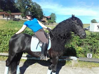 Grote foto geweldig en zeer getalenteerd familie paard dieren en toebehoren paarden