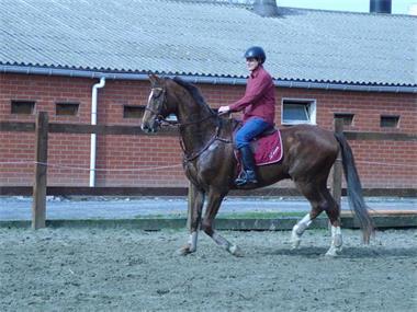 Grote foto te koop paard dieren en toebehoren paarden