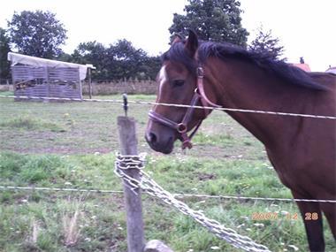 Grote foto paard calowa 0032 0497 06.03.04 dieren en toebehoren paarden