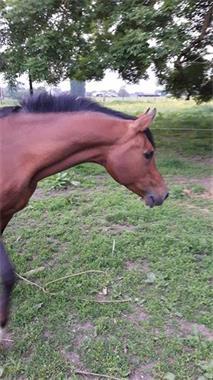 Grote foto paard en pony zoeken nieuwe thuis dieren en toebehoren paarden