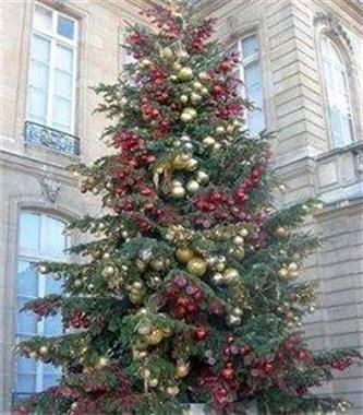 Grote foto levering versierde kerstbomen overal in belgi diensten en vakmensen bedrijfsuitjes