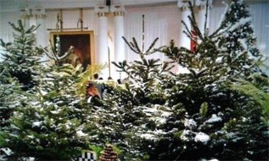 Grote foto huur een versierde kerstboom voor uw bedrijf diensten en vakmensen bedrijfsuitjes