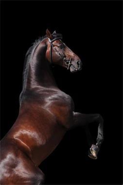 Grote foto lijnzaadolie v sidera dieren en toebehoren paarden