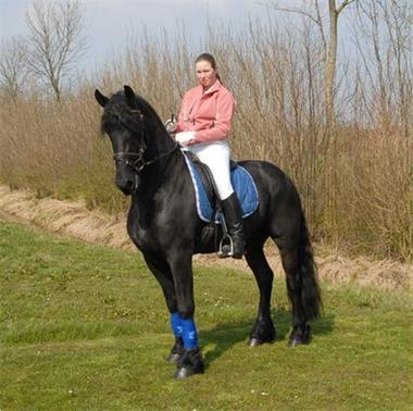Grote foto hoogbegaafde paarden te koop dieren en toebehoren paarden