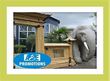 Grote foto reuze olifant huren hasselt brugge safari huren diensten en vakmensen bedrijfsuitjes