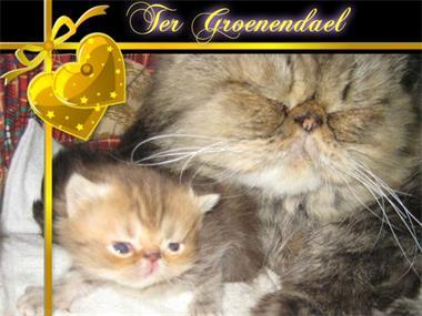 Grote foto mooie jongen dieren en toebehoren overige katten