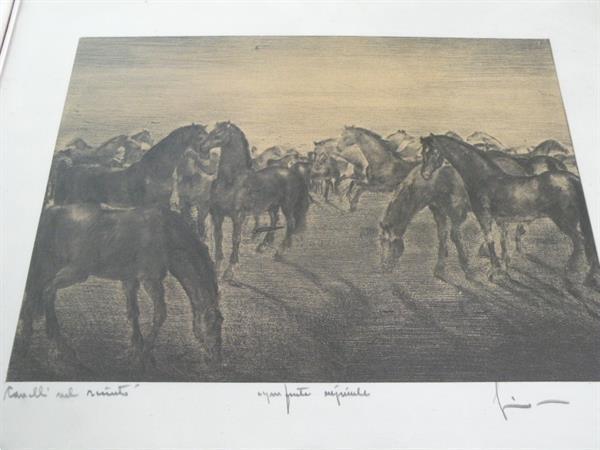 Grote foto ets met paarden. italiaans. informatie gevraagd. antiek en kunst etsen en gravures