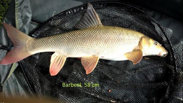 Grote foto deel ervaringen feedervissen watersport en boten witvissen