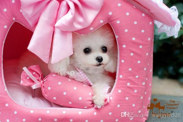 Grote foto hondenhotel miniwoef diensten en vakmensen honden verzorging oppas en les