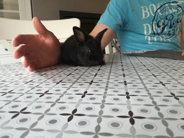 Grote foto zwarte fluffy konijntjes dieren en toebehoren konijnen