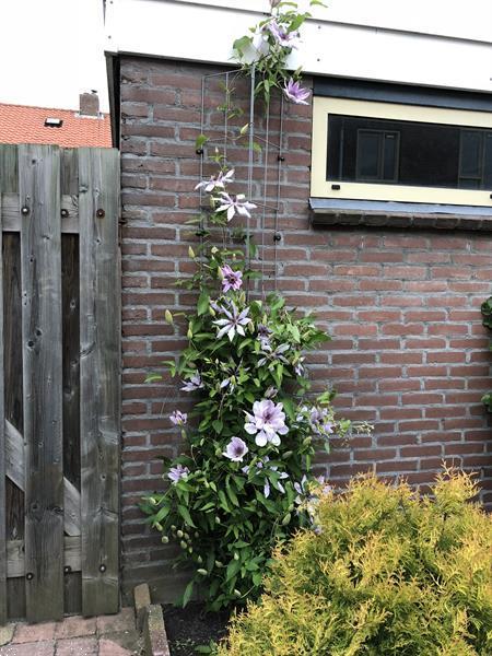 Grote foto inspiratie .. voor een groener 2020 clematis tuin en terras klimplanten