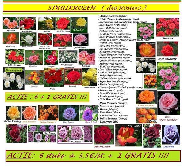 Grote foto fruitbomen sierbomen kleinfruit haagplanten rozen tuin en terras bloemen en planten