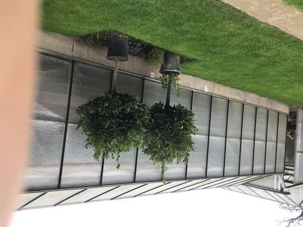 Grote foto laurierbomen op stam tuin en terras bloemen en planten