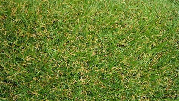 Grote foto rol kunstgras 2x2 7 mtr in veiling bij proveiling tuin en terras gras en kunstgras
