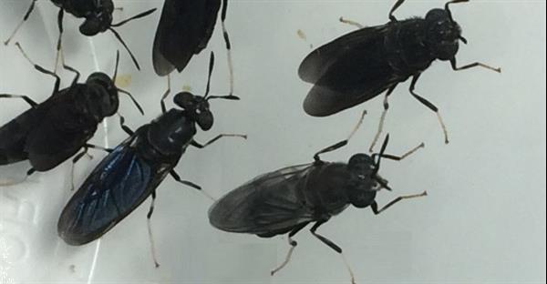 Grote foto zwarte soldatenvlieg led lamp 150w duo led power tuin en terras overige tuin en terras