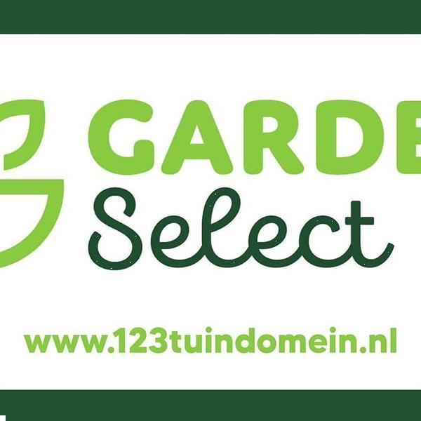 Grote foto bloembollen en zaden direct online bestellen tuin en terras bloembollen en zaden