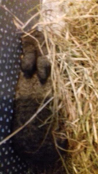Grote foto konijnen te koop dieren en toebehoren konijnen