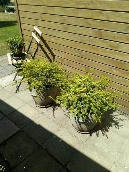 Grote foto lonicera tuin en terras bloemen en planten