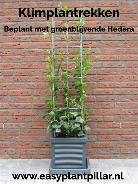 Grote foto klimplantenrekken in plantenbakken en bloembakken tuin en terras bloembakken