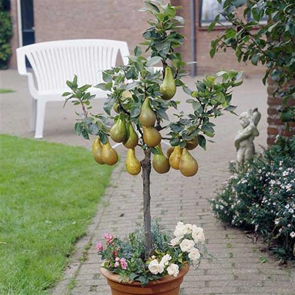 Grote foto fruitplanten nieuwe en ouden soorten. tuin en terras fruitbomen