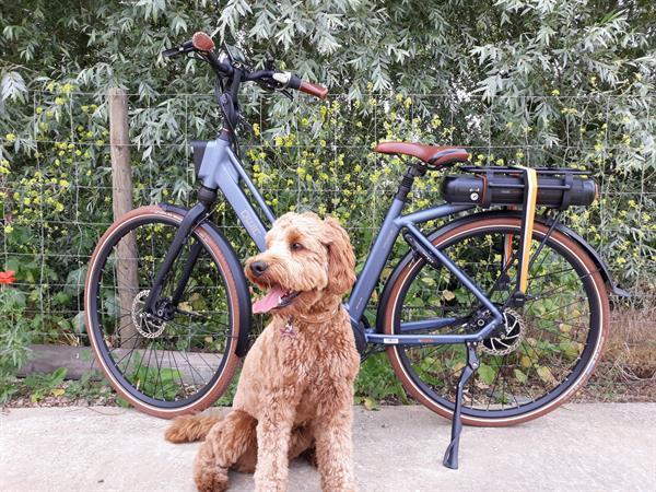 Grote foto qwic luxe premium mn 380 735wh fietsen en brommers damesfietsen