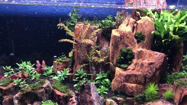 Grote foto red wood stone 10 15cm aquarium decoratie stenen dieren en toebehoren vissenkommen