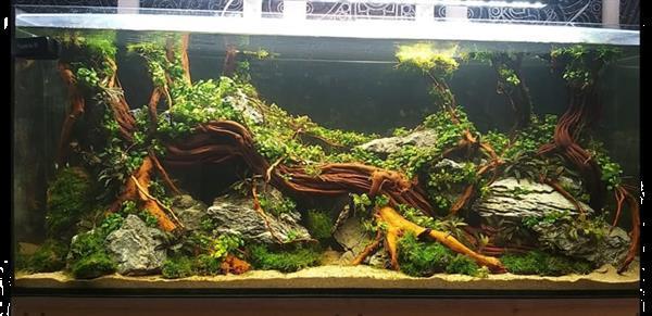 Grote foto golden wood 30 40cm dieren en toebehoren vissenkommen