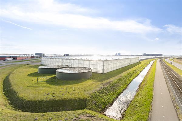 Grote foto glastuinbouwbedrijf te koop agrarisch glastuinbouw
