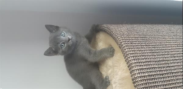 Grote foto prachtige kittens dieren en toebehoren overige katten