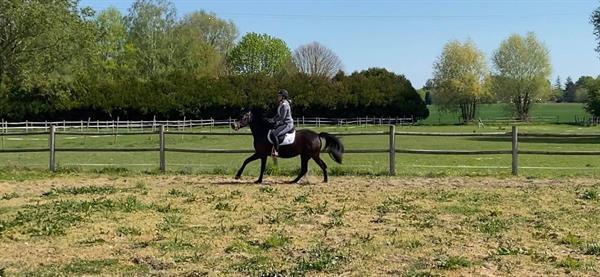 Grote foto paard te koop dieren en toebehoren pony