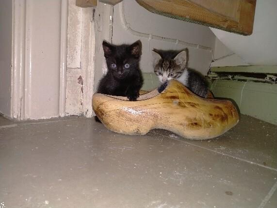Grote foto super mini kittens dieren en toebehoren poezen