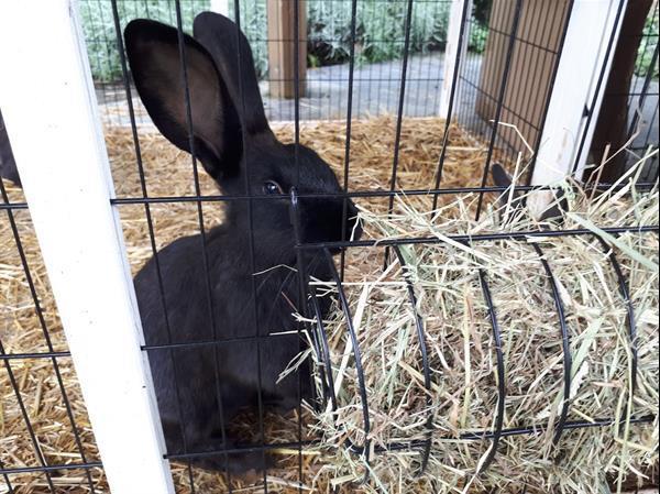 Grote foto prachtige konijntjes dieren en toebehoren konijnen