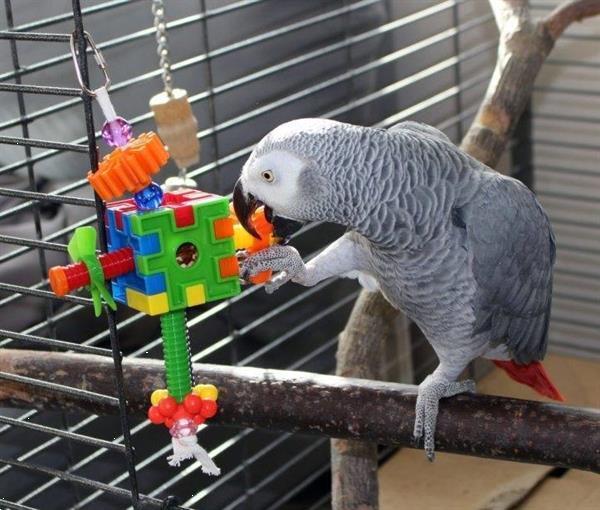 Grote foto grijs papegaai dieren en toebehoren parkieten en papegaaien