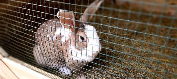 Grote foto nestje vlaamse reuzen op komst dieren en toebehoren konijnen