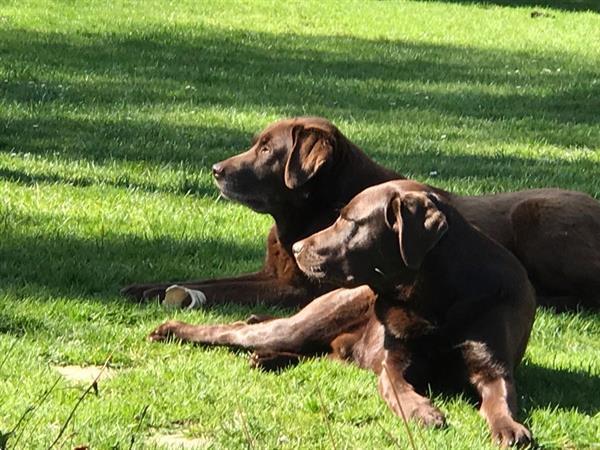 Grote foto huisdier mee op vakantie ardennen vakantie bed breakfasts en pensions